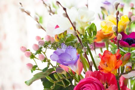 bunte fruehlingsblumen