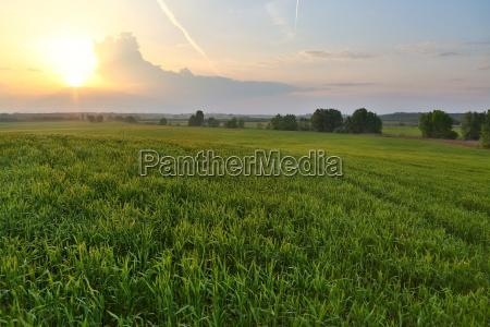 agircutural landscape in sunlight