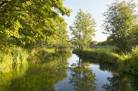 tranquil river surrounded by sunny green