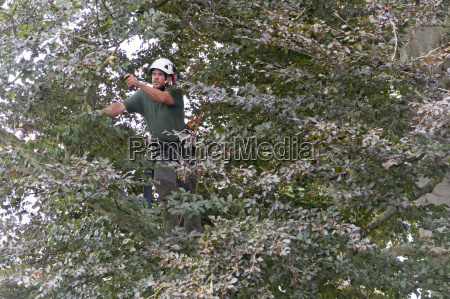 tree surgeon wearing safety harness pruning