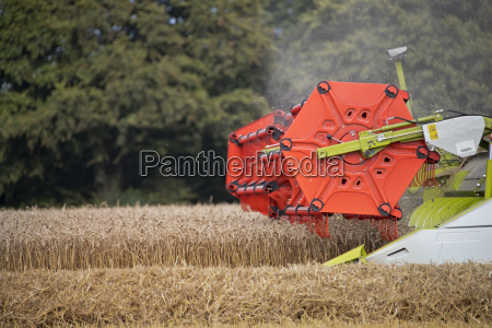 close up of combine harvester harvesting