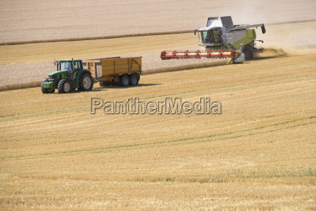 combine harvester harvesting wheat crop in
