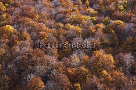 overview of autumn foliage in abruzzo