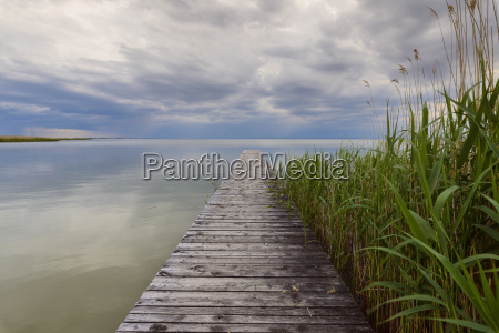 wooden jetty with reeds at weiden