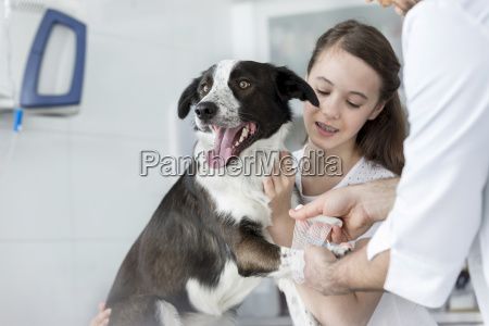 dog in veterinary clinic receiving a