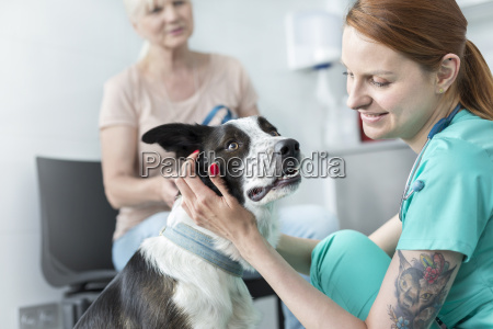 veterinarian assistant soothing dog in veterinary