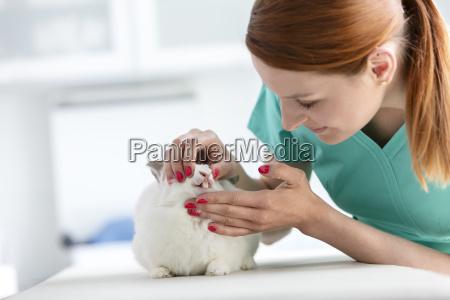 vet examining rabbit in veterinary clinic