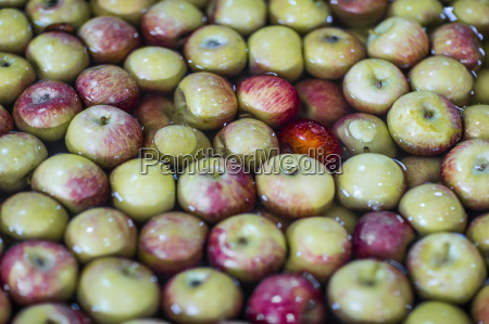 group of fresh apples in water