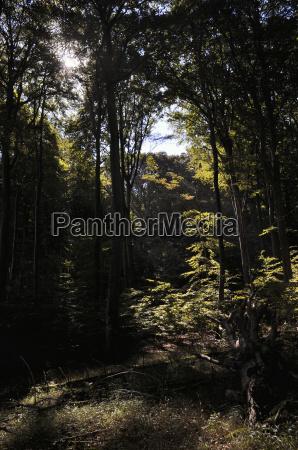 laubwald am hochufer von stubbenkammer ruegen