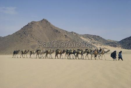 tuareg und frau die kamelzug durch