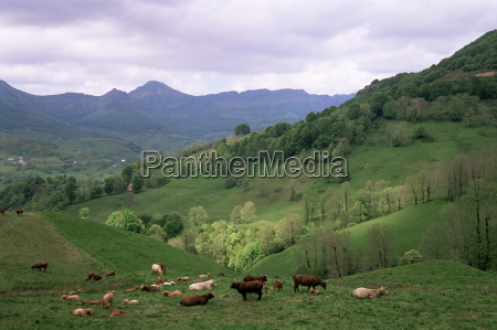 fahrt reisen farbe berge tier landwirtschaft