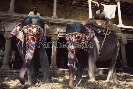 the maharajahs elephants varanasi uttar pradesh