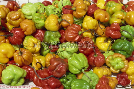 close up of peppers for sale
