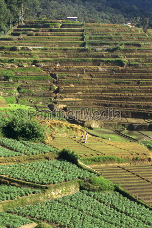 agriculture nuwara eliya area sri lanka