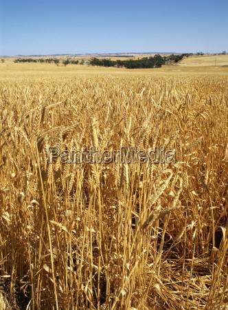 fahrt reisen landwirtschaft ackerbau australien fuenfter