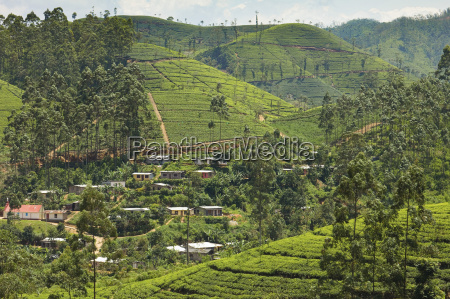 village amidst tea plantations in the