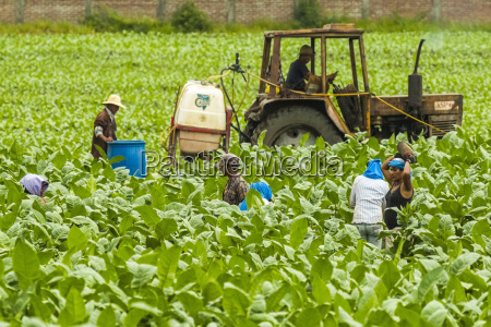 workers and tractor in field of