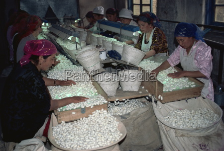 silk factory xinjiang china asia