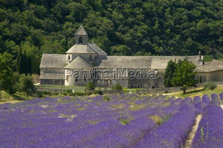 the abbey de senanque a cistercian