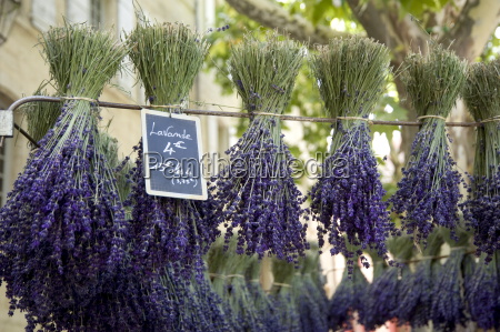 bunches of lavender for sale in