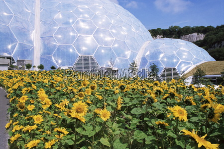 sunflowers and the humid tropics biome