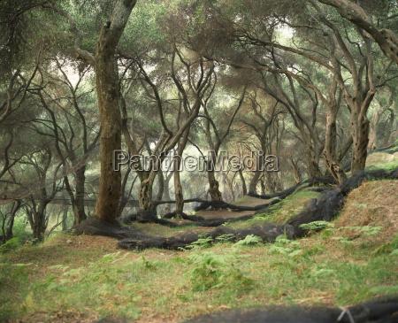 fahrt reisen baum baeume griechenland botanik