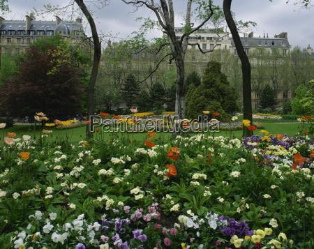 mohnblumen, im, parc, de, monceau, paris, frankreich, europa - 20602955