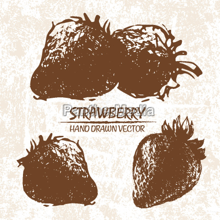 digital vector detailed strawberry hand drawn