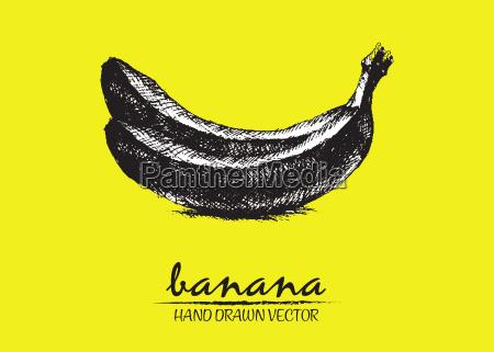 digitale vektor detaillierte banane hand gezeichnet