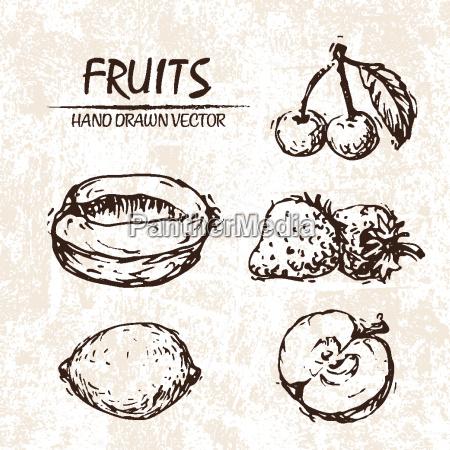digitale vektor detaillierte frucht hand gezeichnet