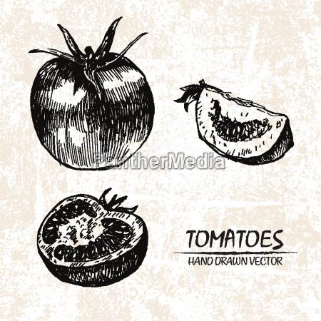 digitale, vektor, detaillierte, tomaten, hand, gezeichnet - 20608639
