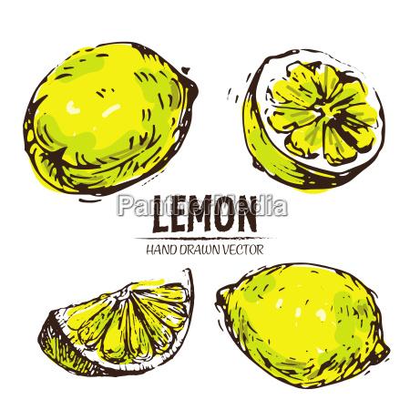 digital vector detailed color lemon hand