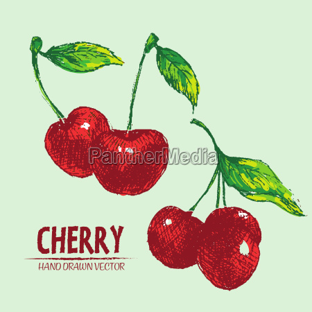 digital vector detailed color cherry hand