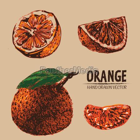 digital vector detailed color orange hand
