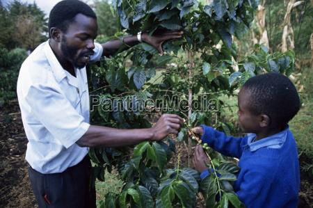schueler lernen ueber kaffee kenia ostafrika