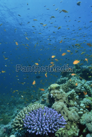 reef scene with fish and coral