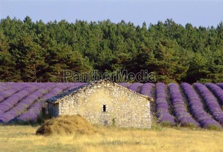 stone building in lavender field plateau