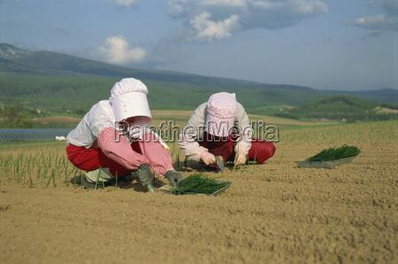 two women in bonnets planting onions