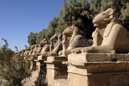 ram headed sphinxes temple of karnak