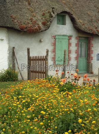 marigolds and dahlias in the garden