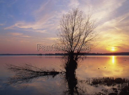 tranquil scene of bare tree silhouetted