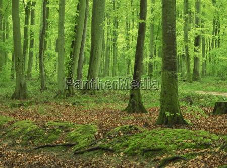 fahrt reisen baum baeume botanik europa