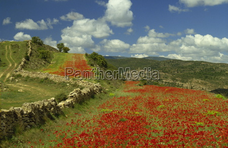 landscape near teruel maestrazgo aragon spain