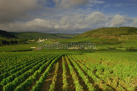 landscape of vineyards and hills near
