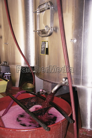 racking grape juice into fermentation tanks