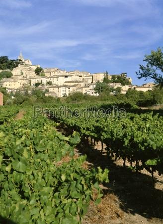 vines in vineyard village of bonnieux