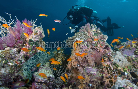 diver and hard and soft coral