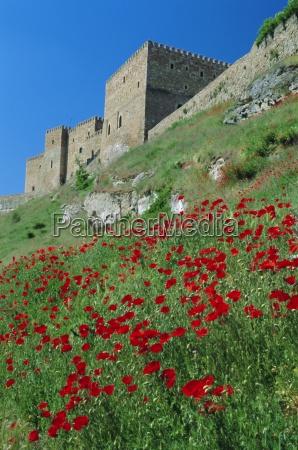 poppies on hillside beneath the castle