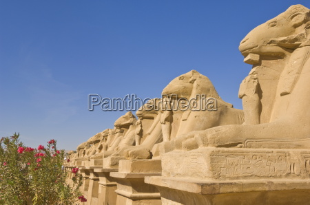 row of sphinx with ram heads
