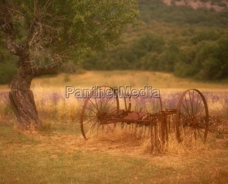 fahrt reisen baum baeume landwirtschaft ackerbau